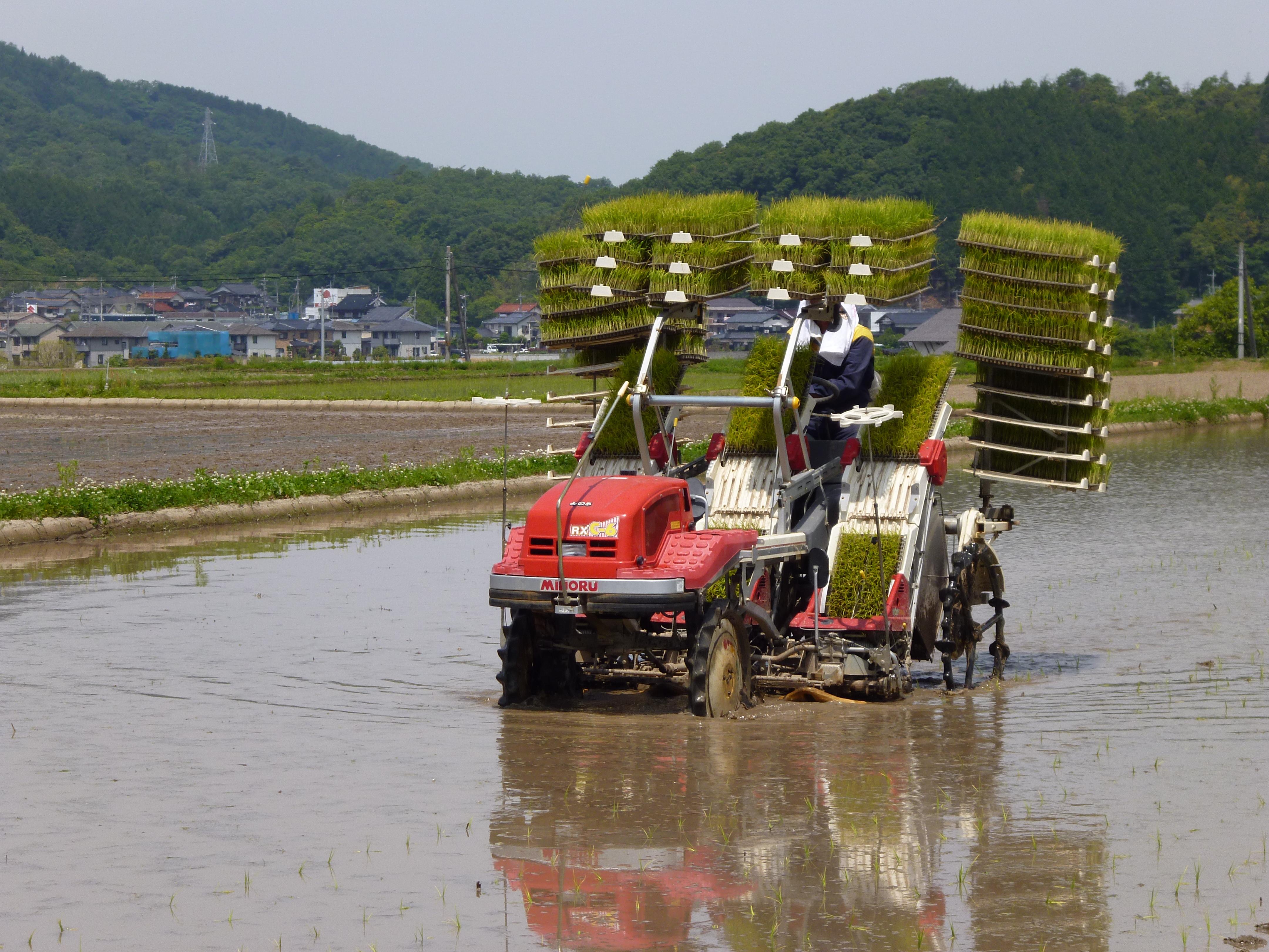田中農場の田んぼ