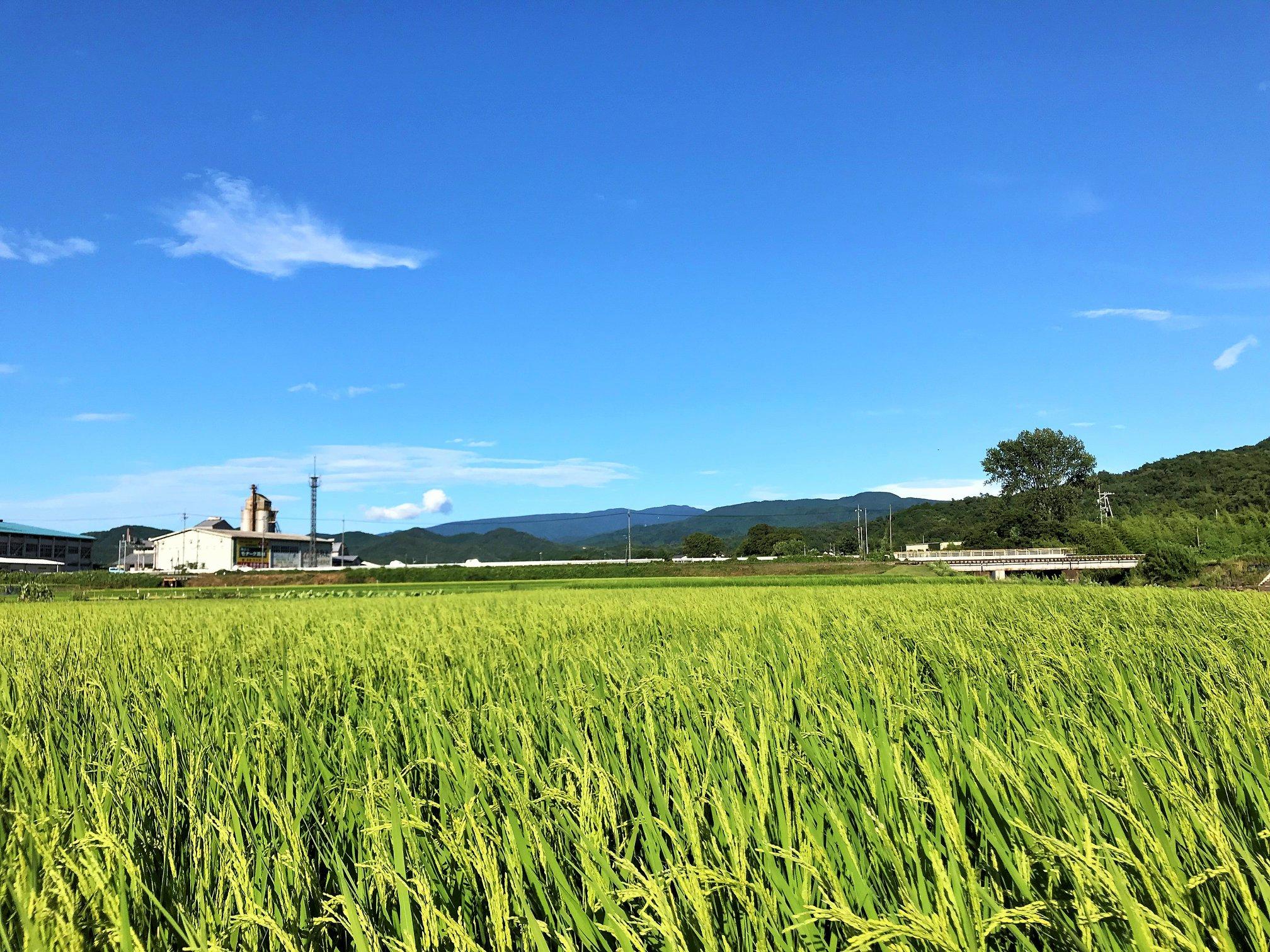 鳥取県八頭町田中農場です