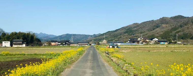 菜の花の農業通路