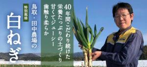 鳥取・田中農場の白ねぎ3kg(約18本から30本) 40年間のこだわりの土づくり 甘くてジューシー 歯触り柔らかな特別栽培