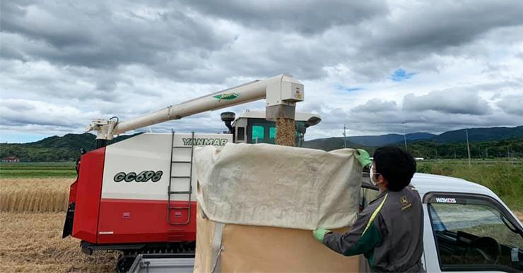 小麦の収穫コンバインでの作業風景