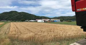 田中農場小麦畑