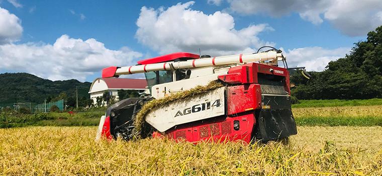 稲刈り豆知識!稲刈りのタイミングや見極め方からコンバインの歴史までご紹介!