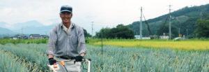白ねぎ栽培担当の谷口リーダー毎日収穫に大忙し