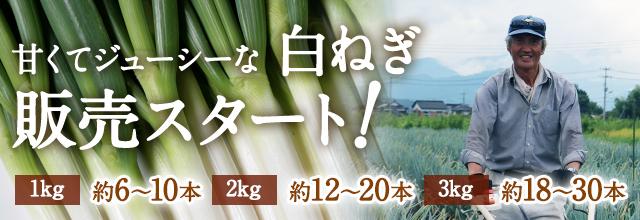 甘くてジューシーな田中農場の白ネギ販売スタート