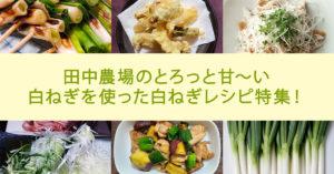 鳥取・田中農場のとろっと甘〜い白ねぎを使った白ねぎレシピ特集