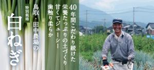 農薬・化学肥料不使用の鳥取・田中農場の特別栽培白ねぎ(長ネギ)