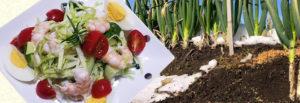 鳥取・田中農場の特製ドレッシングネギネージュで!えびと野菜の彩りデリ風サラダ
