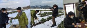 2021年1月13日日本海テレビ ニュースevery日本海に鳥取・田中農場の極寒越冬白ねぎを取材していただいている様子