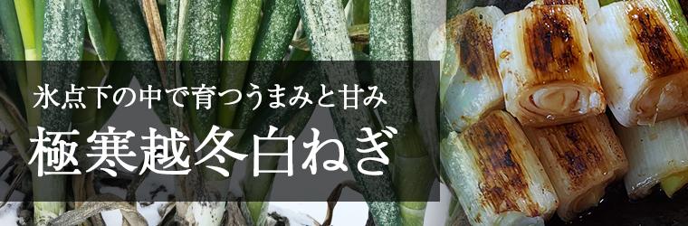 氷点下の中で育つ旨みと甘み 鳥取・田中農場オリジナル「極寒越冬白ねぎ」