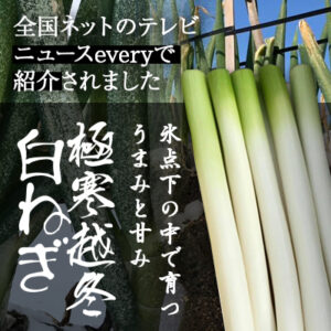 全国ネットのテレビ・ニュースeveryで紹介 鳥取・田中農場の極寒越冬白ネギ