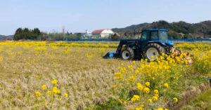 田中農場菜の花が咲く春の様子