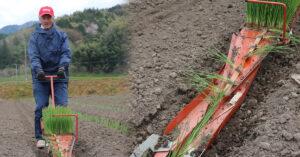 鳥取・田中農場の白ねぎの定植をひっぱりくんで作業している様子