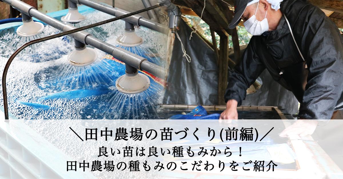 田中農場の苗づくり前編 良いお米は良い種籾から!田中農場のたなもみのこだわりをご紹介 種籾準備の浸種をしている様子