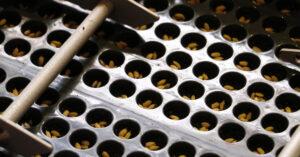 田中農場の苗づくり(後編) 〜稲の苗を育てるための苗代(なわしろ)の準備から播種(種まき)についてご紹介〜