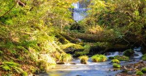 鳥取の川の画像